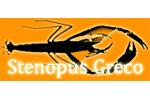 Stenopus Greco