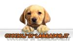 Regala un Cucciolo di Labrador a Catania